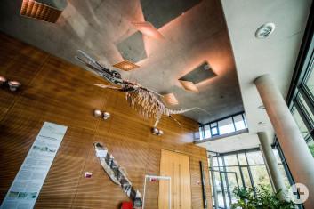 Foyer Jurasaal mit Saurier
